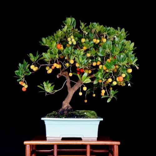 Arbutus Unedo или Земляничное дерево (семена)