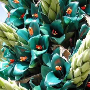 Puya BERTERONIANA или Пуйя Бертерони (семена)