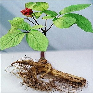 Panax Ginseng или Женьшень Настоящий (семена)